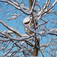 Скворечник-2 :: Фотогруппа Весна.