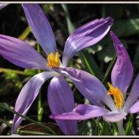 spring 2015 :: igor G.