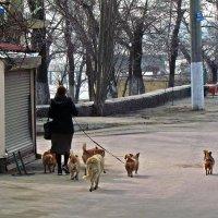кто кого выгуливает? :: Александр Корчемный