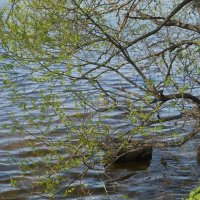 Весна, весна... :: Юрий Шувалов