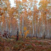 Осенний краски леса :: Татьяна Малинина