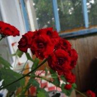 Цветы на балконе :: Николай Филоненко
