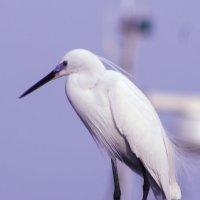птица счастья :: Адик Гольдфарб