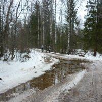 Дорога к монастырю (7 км по бездорожью) :: Елена Павлова (Смолова)