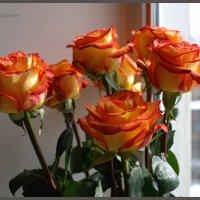 Букет роз – это намёк. Букет роз – это признание. :: Anna Gornostayeva