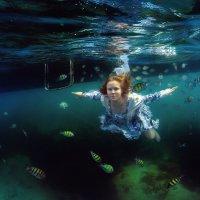 fishes :: Дмитрий Лаудин