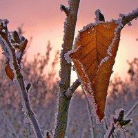 Осенний :: Александр Велигура
