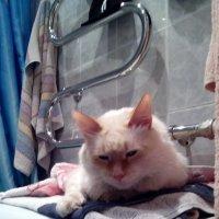 Мой кот :: Наталья
