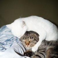 НЕ ОТДАМ НИКОМУ.... САМА ЛЮБИТЬ БУДУ!!! :: Наталья Меркулова