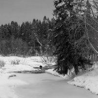 В Обнорских лесах :: Валерий Талашов