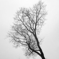 Туман :: Сергей Григорьев