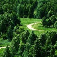 Лесная дорога. :: Александр