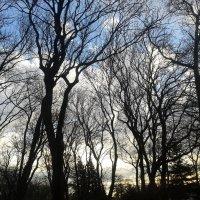 Чёрные деревья :: Валерия Кратенко