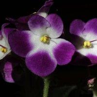 Домашний цветок :: Damir Si