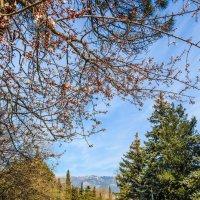 Первые весенние цветы и последний снег в горах :: Юрий Яловенко