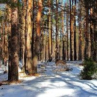 Не спорят с солнцем мартовские тени... :: Лесо-Вед (Баранов)