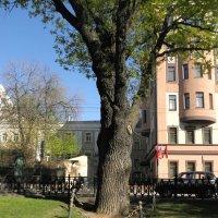 Двухсотлетний дуб на Тверском бульваре. :: Елена