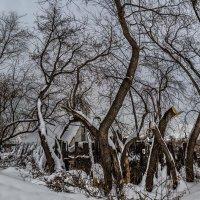 Пейзаж с деревьями :: Nn semonov_nn