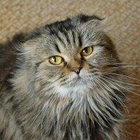 Домашний калейдоскоп.  Кошка Майя. :: Геннадий Александрович