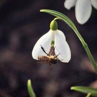 Весна пришла :: Анастасия Тодорова