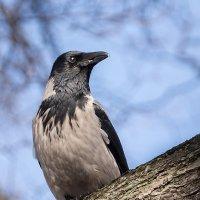 Гордый птица :: Alex Bush