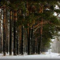 Зимний лес. :: Алексей Подлесный
