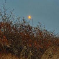 восход луны :: сергей пейкер