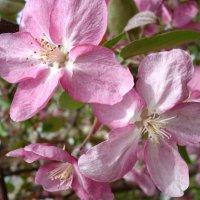 Розовые крылья :: Наталия Григорьева