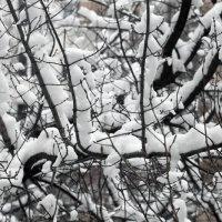 Опять зима :: Nikolay Monahov