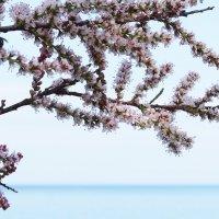 Весенний этюд :: Swetlana V