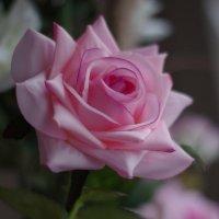 Rose :: Ju Les