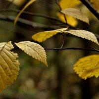 Осень... :: VADIM *****