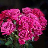 Мини розы :: Татьяна Губина
