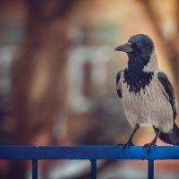 я птица гордая ... :: Екатерина