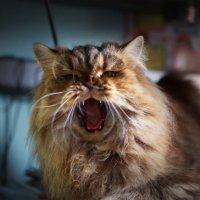 Мартовские кошки :: Юлия