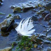 Лебеди пролетели... :: Владимир Секерко