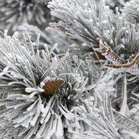 Вспоминаем Новый Год… :: Евгений Виноградов