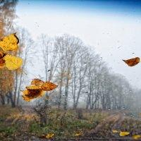 Желтый лист осенний :: Игорь Кожухов