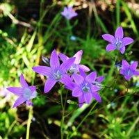 Весенние цветочки :: Damir Si