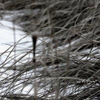 Зимние травы :: Валерия  Полещикова