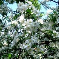 Милые женщины, с праздником! Пусть в душе у Вас всегда цветет весна! :: Елена Семигина