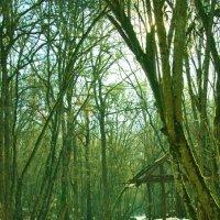 Лесной приют :: Иван Начинка