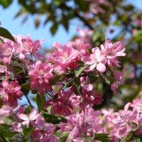 Пора цветения :: Елена Елена