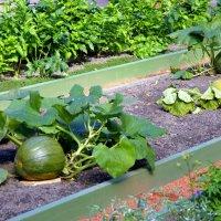 Урожай в Летнем саду :: Валерий Новиков