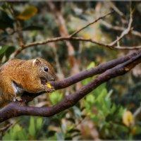 Национальный Парк Кинабалу,о.Борнео,Малайзия... :: Александр Вивчарик