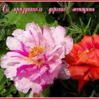 Поздравляю с праздником ! :: nadyasilyuk Вознюк