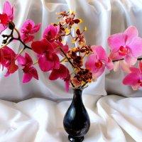 Мои орхидеи для вас дорогие женщины !!!!! Будьте счастливы и любимы !!!! :: Hаталья Беклова