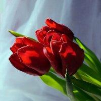 С чудесным праздником весны 8 марта! :: Jeni -