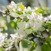 Весна :: Татьяна Бондарь