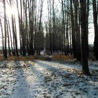 Последнее дыхание зимы :: Мария Спивак